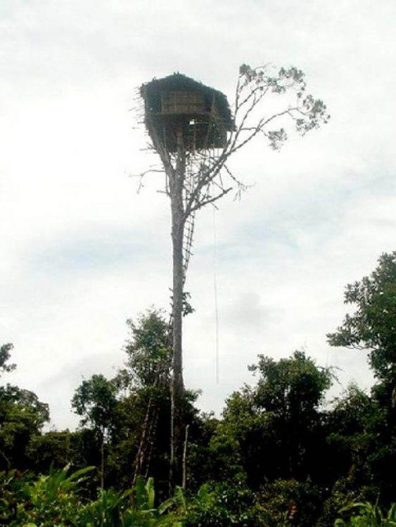 Дом на высоком дереве