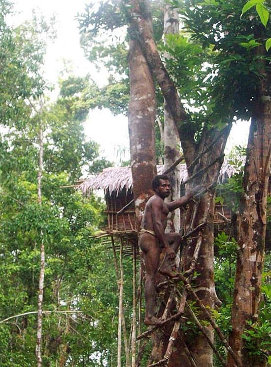Высокие дома на деревьях племени Караваи