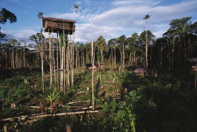 Дома на деревьях - строительство