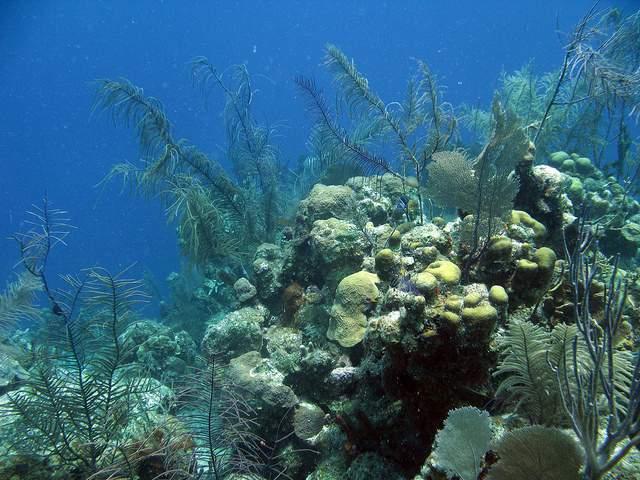 Подводные растения