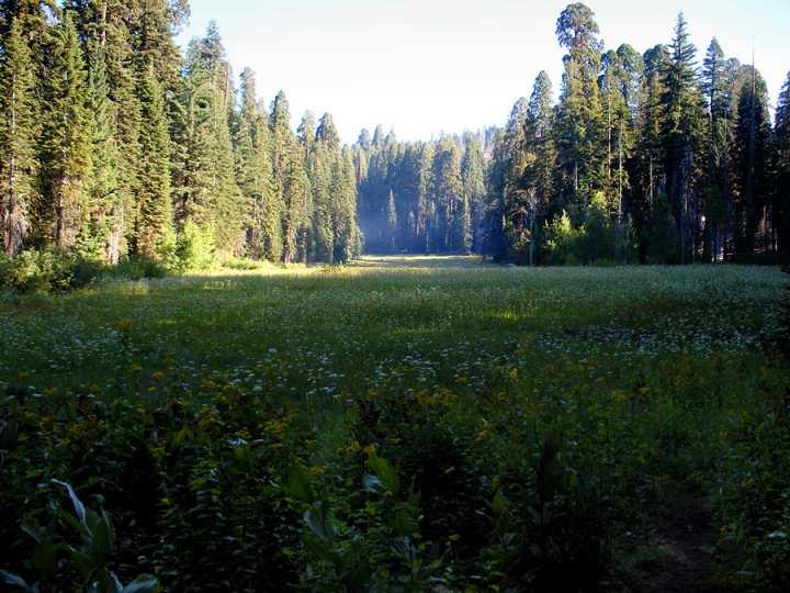 Лужайка ПОлумесяца в парке Секвойя