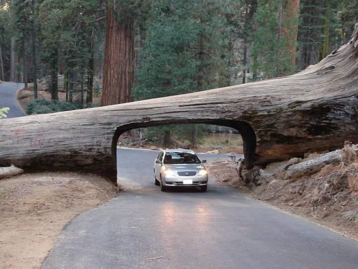 Туннель из ствола дерева