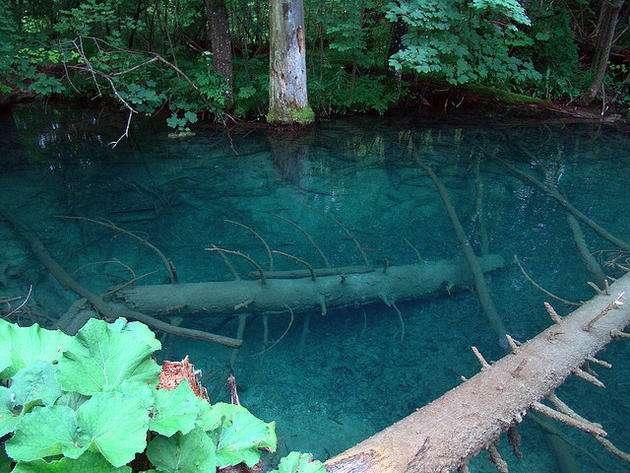 Стволы деревьев в озере
