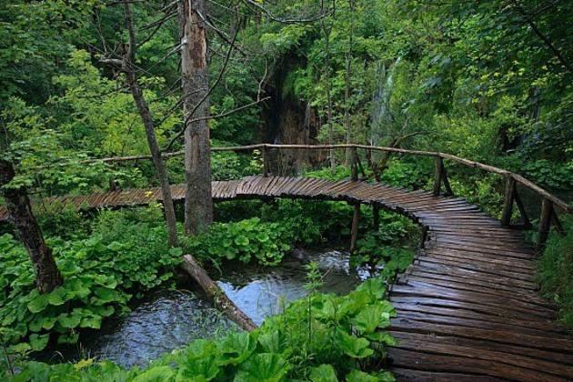Деревянный мостик в Плитвице