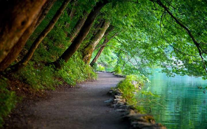 Тропинка между лесом и озером