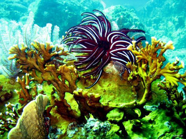 Морское дно на островах Пхи-Пхи, Таиланд