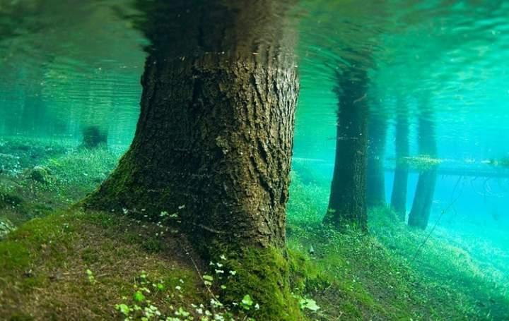 Деревья под водой