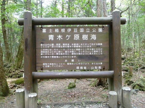 Лес самоубийц Аокигахара, Япония