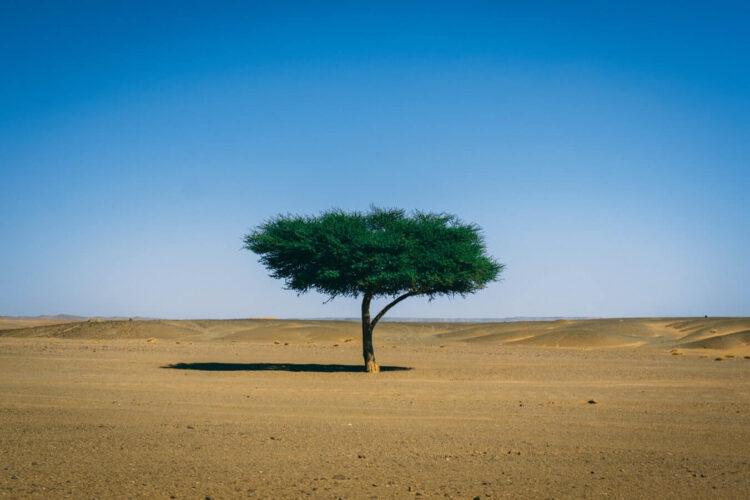 Одинокое дерево в Сахаре
