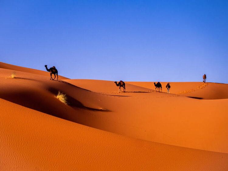 Пустыня Сахара утром
