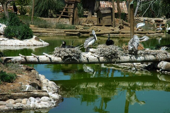 Зоопарк Лагуша, Португалия