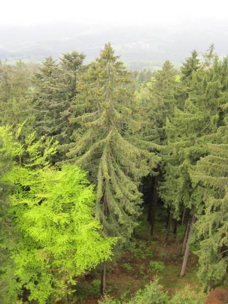 Баварский Лес - «Баеришервальд» - Bayerischer Wald