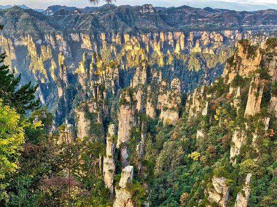 У подножия пиков Тяньцзи растёт целый лес.