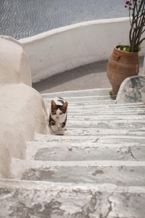 Кот на улочках Санторини
