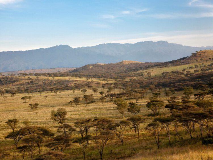 Область кратера в Национальном парке королевы Елизаветы