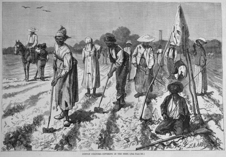 Чернокожие рабы собирают хлопок в США