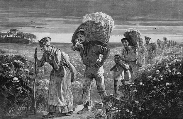 Черные рабы собирают хлопок